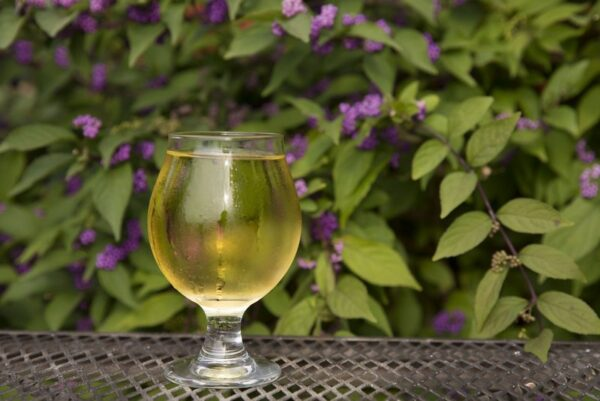 A glass of Storm Break cider on a bench