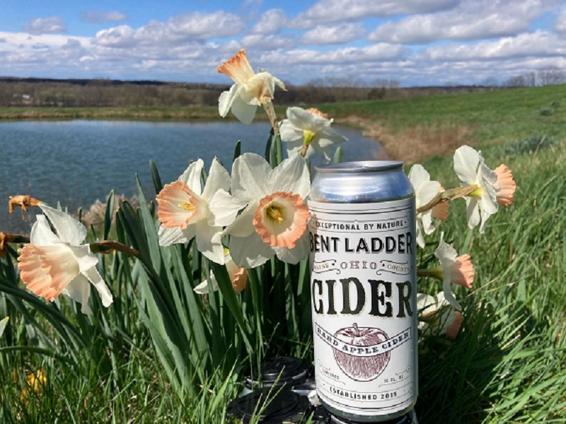 A can of Garden Glory cider sitting out by the daffodils
